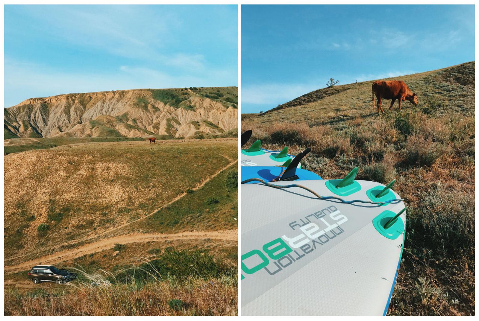 julia-karpacheva-paddleboarding-russia-black-sea-cows-in-the-countryside