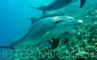 """""""Guardians of the Seas"""" to Save the Adriatic Dolphins"""
